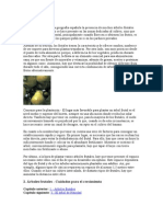 Árboles frutales_poda