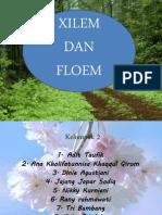 Moranfistum Xilem Dan Floem Ppt