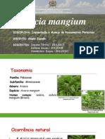 Acacia Manguim-madeira Do Futuro PDF
