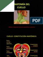 Anatomía Del Cuello 1