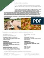 enfermedadesocasionadasporcontaminacionambiental-120913164954-phpapp02