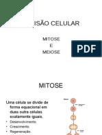 BIOLOGIA - Divisão Celular