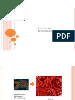 cultivo de microorganismos.pdf