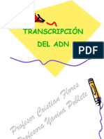 transcripcion 2014
