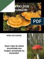 Reino Dos Fungos