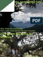 PRESENTACIÓN+1.+Árboles+Monumentales+ASM