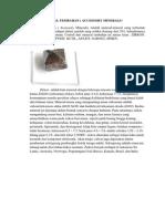 Mineral Tembahan