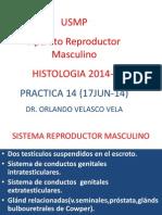 Ap. Rep. Masculino.pptx