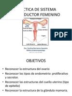 Sist. Rep. Femenino.pptx