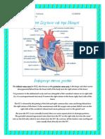 Cross Section Heart_superior Inferior Vena Cava