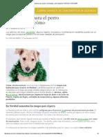 Seis Peligros Para El Perro en Navidad, ¿Cómo Evitarlos