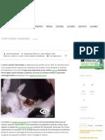Tumor Venéreo Transmisible _ Diagnóstico Veterinario