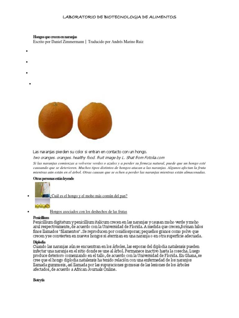 Hongos que crecen en naranjas - El moho es un hongo ...