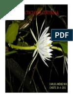 Cactaceae de Guatemala-2.pdf