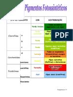 Transparência n.º 4 - Pigmentos Fotossintéticos