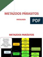 METAZOOS PÁRASITOS