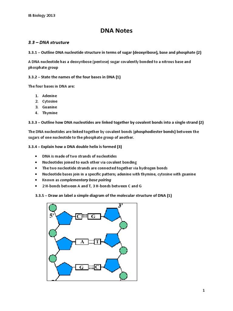 Dna Notes 3 7 Complete Translation Biology Dna