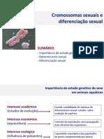 2014 CMA cromossomas sexuais e diferenciacao sexual.pdf