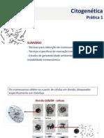 Pratica 1 citogenetica.pdf