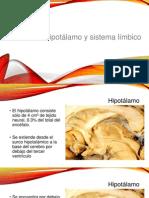 Hipotalamo y Sistema Limbico