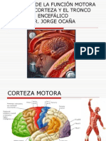 Control de Funcion Motora Por Corteza y Tronco Encefalico-1