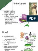 Ch 9 Genetics