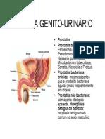 Sistema Genito Urinário