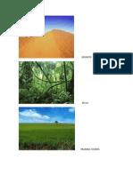 Imágenes de Biomas