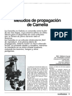 Camelias Metodo de Propagación