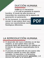 Anatomía Del Aparato Reproductor Femenino (1)