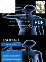Esofago y Estomago