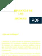 estructurahongos-130513142325-phpapp02