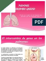 Pulmones, Intercambio Gaseoso