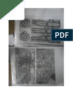 Planșe Microscopie electronică