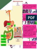 Digestion y Absorcion de Proteinas