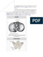 Anatomia Cc