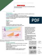 Resumo - Hematopoese e Eritropoese - Hematologia (1)