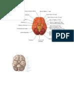 mapa cerebro