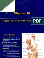 digestive gland2