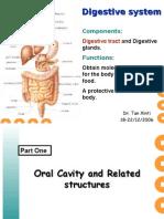 digestive tract courseware(tanxinti)