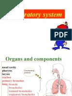 Respiratory system06