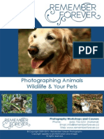Animal and Pet Photographing