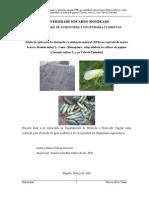 Efeito da aplicação de diatomite vs adubação mineral (NPK) no controlo da mosca branca Bemisia tabaci L. Genn. (Homoptera