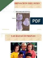 Bioioquimica determinacion del sexo y enfermedades