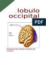 91384845 Lobulo Occipital