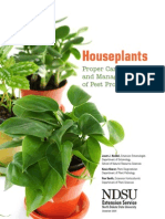 House Plants Care