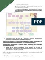 Practico11 - Endocrino Final