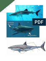 Fotos Tiburones