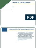 Microtubule Cancer