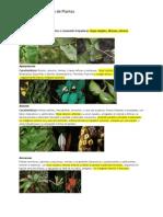 resumen de familias de plantas